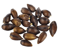 View Seeds