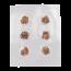 Microdosing Magic Truffles | Vacume sealed