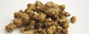 Magic Truffles Cultivation